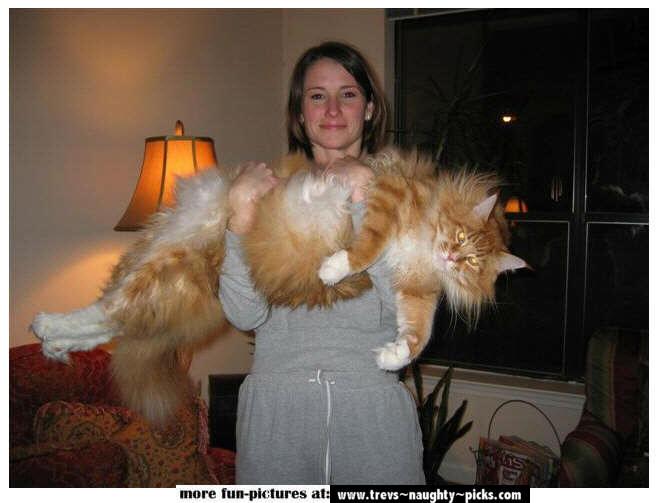 اغرب القطط في العالم...... Abig-c10