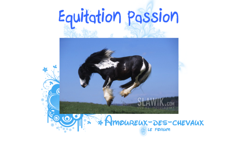 Examen Débutant Pincesse Océane Chevau10