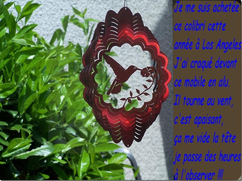 Mon Colibri dans mon jardin, il est splendide !!! Mon_co10