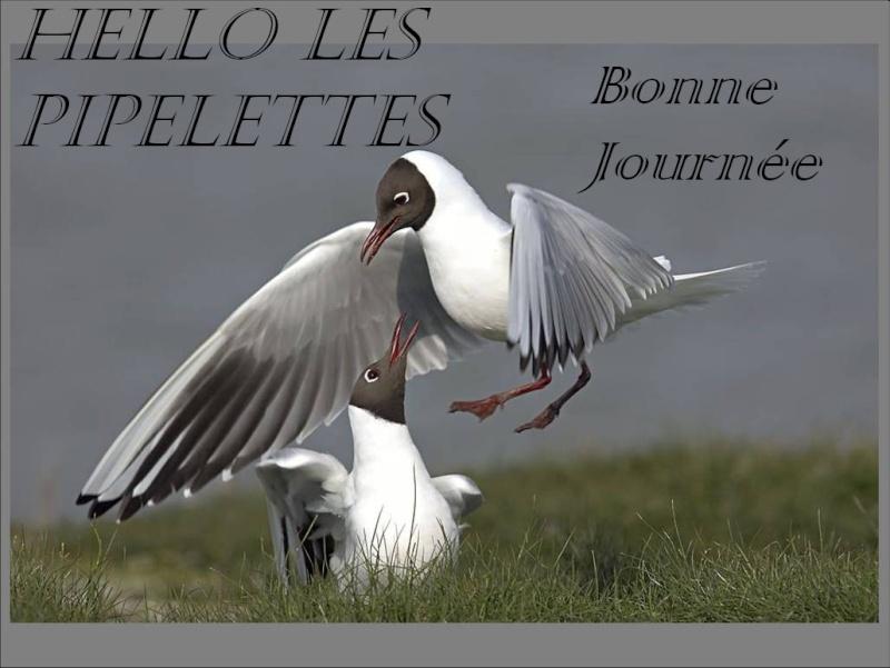 Création Chantalou  Hello Pipele11