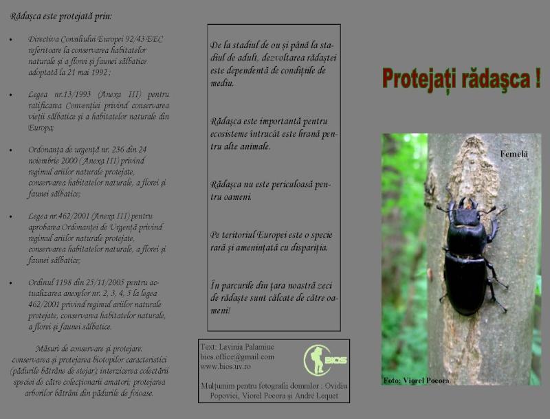 Protejati Radasca! Lucanu10