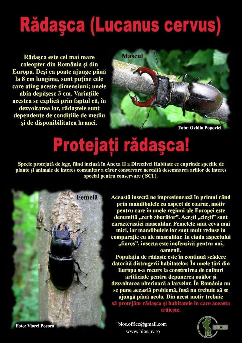 Protejati Radasca! Poster11