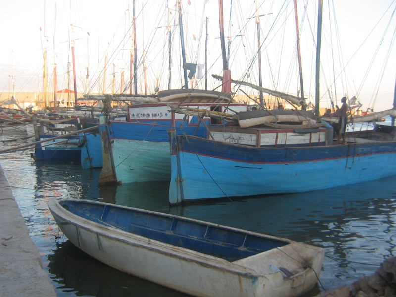 Madagascar Majung19