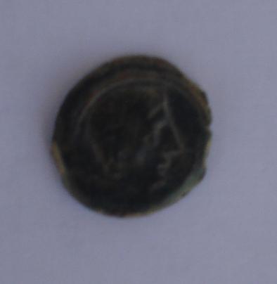 Semis de Castulo (FAB714 ?) Dsc00110