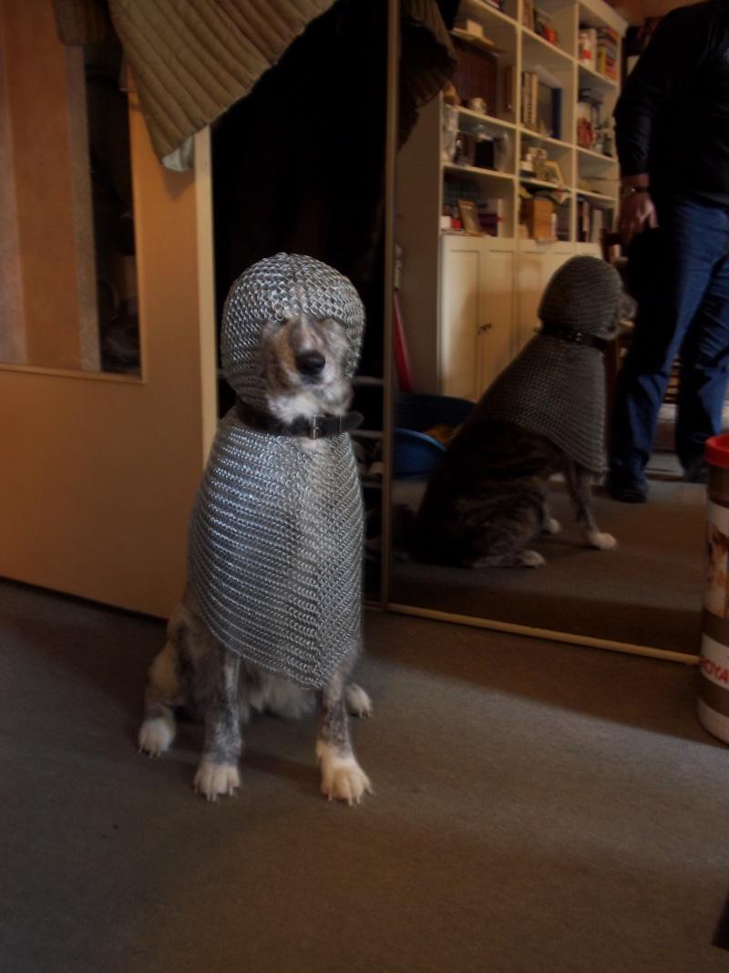 Qui dira que les chiens sont les rois? 100_1410