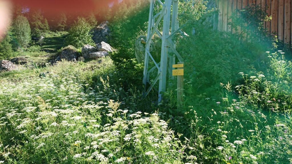 L'Alpage de la Davie depuis Le Chevril 01010