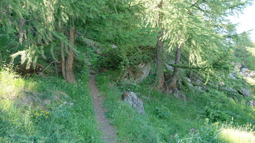 L'Alpage de la Davie depuis Le Chevril 01210