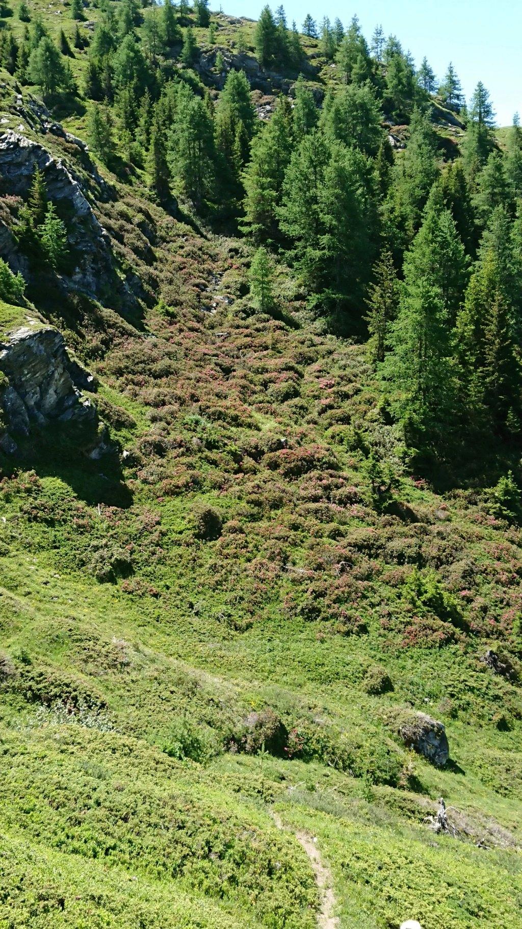 L'Alpage de la Davie depuis Le Chevril 03410