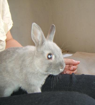 Pimprenelle, petite lapine de 2 mois environ Pimpre14