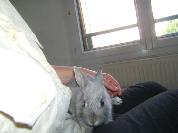 Pimprenelle, petite lapine de 2 mois environ Pimpre15