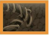 Clan Inuzuka Gatsug10
