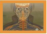 Ninjutsu médical Ranshi10