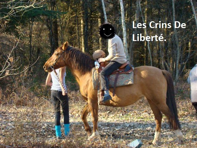 (Dept 63) DUN,  fjord/quarter horse, Sauvée par Morgane63 ! (Octobre2012) Chez_t10