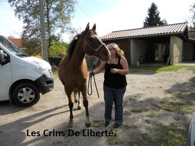 (Dept 63) DUN,  fjord/quarter horse, Sauvée par Morgane63 ! (Octobre2012) Dscn1610