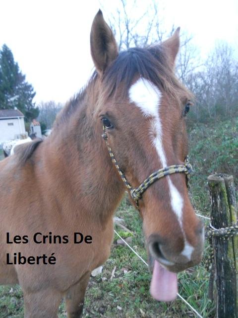 (Dept 63) DUN,  fjord/quarter horse, Sauvée par Morgane63 ! (Octobre2012) Dscn2110