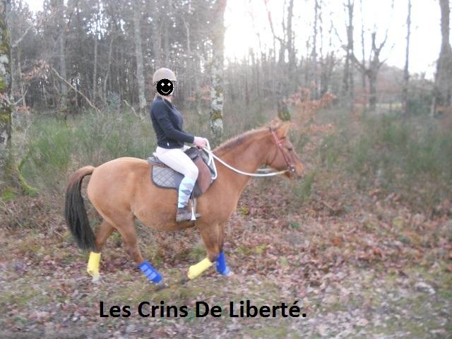 (Dept 63) DUN,  fjord/quarter horse, Sauvée par Morgane63 ! (Octobre2012) Dscn2111