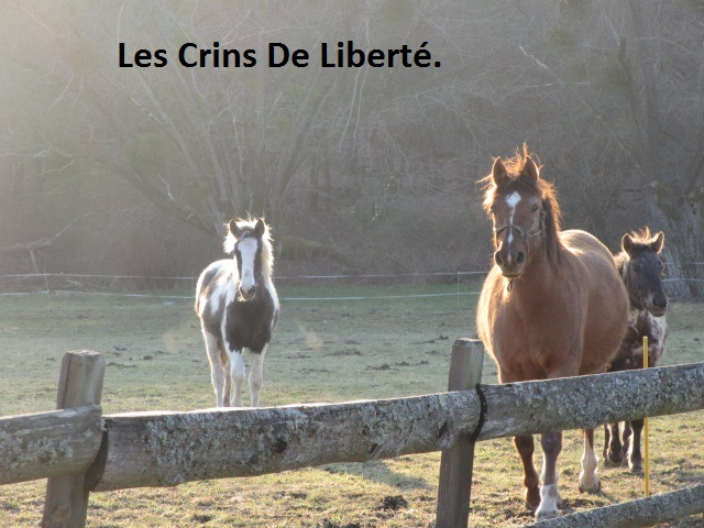 (Dept 63) DUN,  fjord/quarter horse, Sauvée par Morgane63 ! (Octobre2012) Img_0910
