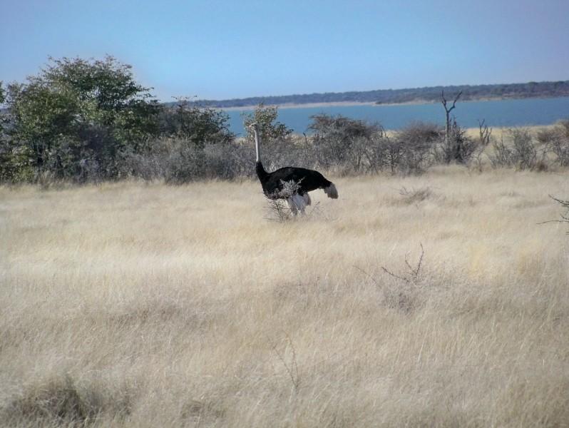 Africa 2011: Sud Africa, Namibia, Zambia su Yamaha XT 660 R e Yamaha XT 660 Z Tenerè Resiz156