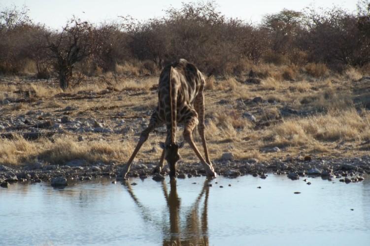 Africa 2011: Sud Africa, Namibia, Zambia su Yamaha XT 660 R e Yamaha XT 660 Z Tenerè Resiz158