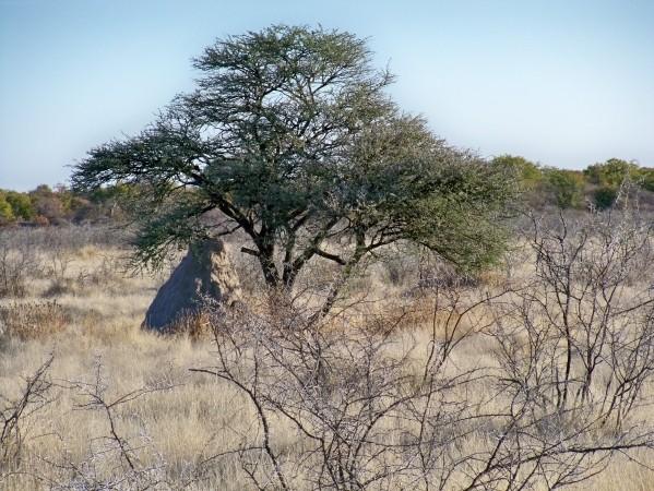 Africa 2011: Sud Africa, Namibia, Zambia su Yamaha XT 660 R e Yamaha XT 660 Z Tenerè Resiz159