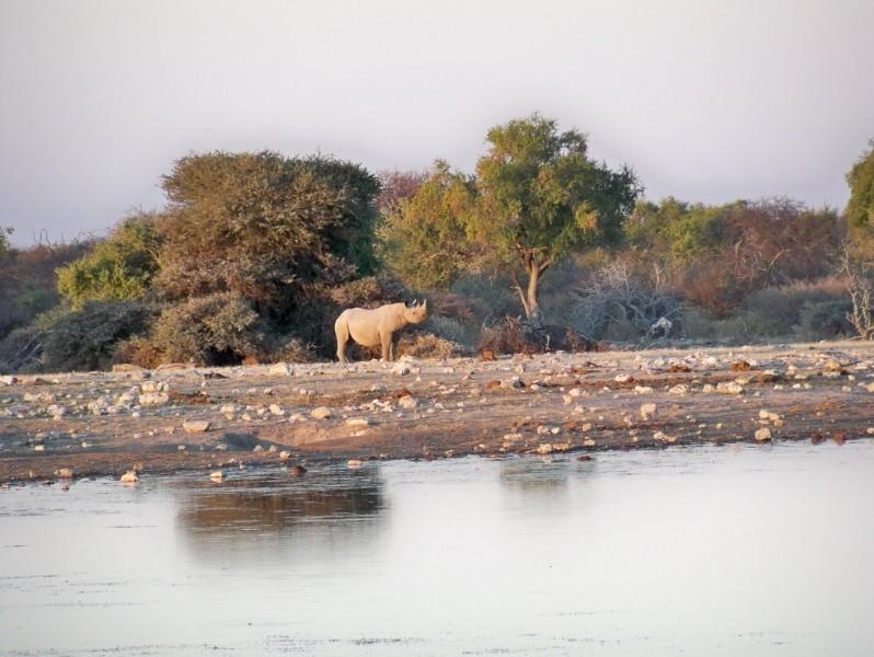 Africa 2011: Sud Africa, Namibia, Zambia su Yamaha XT 660 R e Yamaha XT 660 Z Tenerè Resiz164