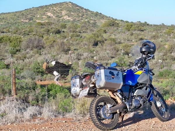 Africa 2011: Sud Africa, Namibia, Zambia su Yamaha XT 660 R e Yamaha XT 660 Z Tenerè Resiz305