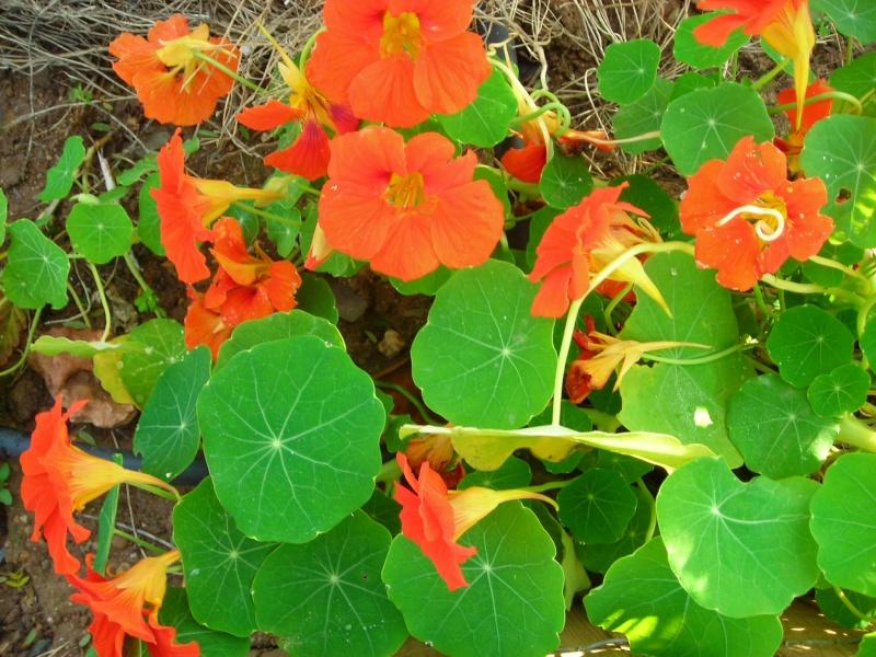 Nuestro jardín de Sa Possessió - Página 2 137_ll10