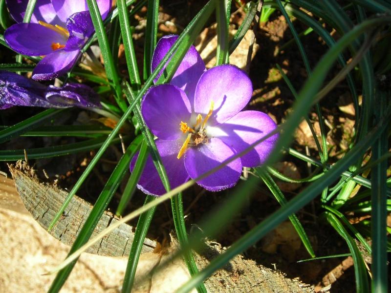 Nuestro jardín de Sa Possessió - Página 2 148_fl10