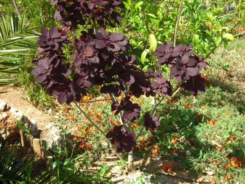 Nuestro jardín de Sa Possessió - Página 6 160_pe10