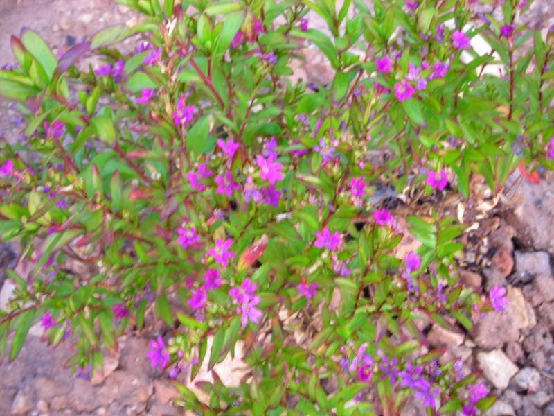 Nuestro jardín de Sa Possessió - Página 2 173_pl12