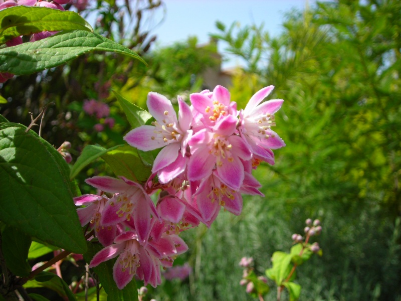 Nuestro jardín de Sa Possessió - Página 2 173_pl13