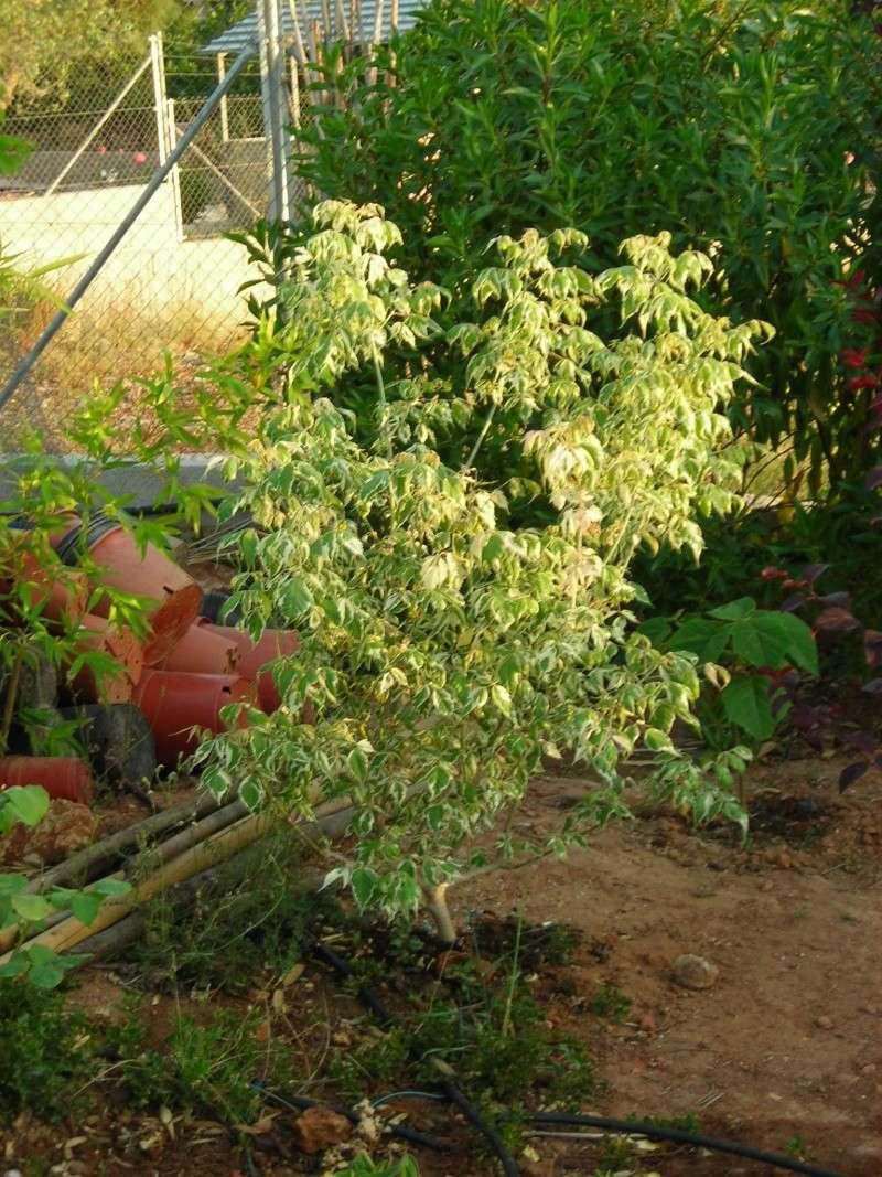 Nuestro jardín de Sa Possessió - Página 6 173_pl16