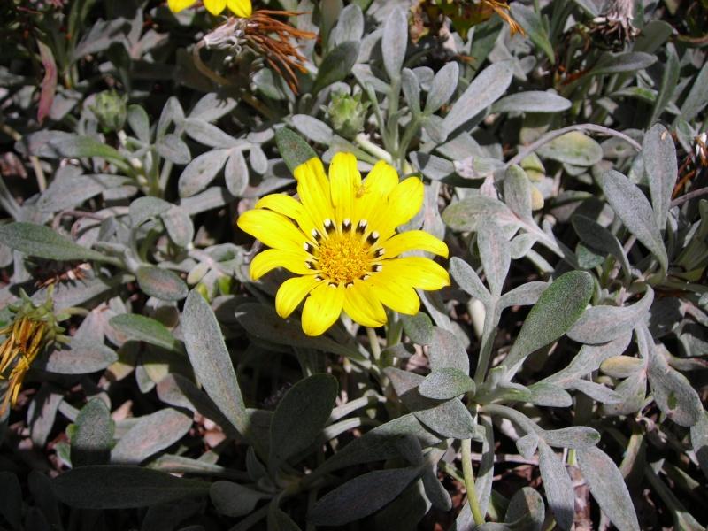 Nuestro jardín de Sa Possessió - Página 2 179_pl10