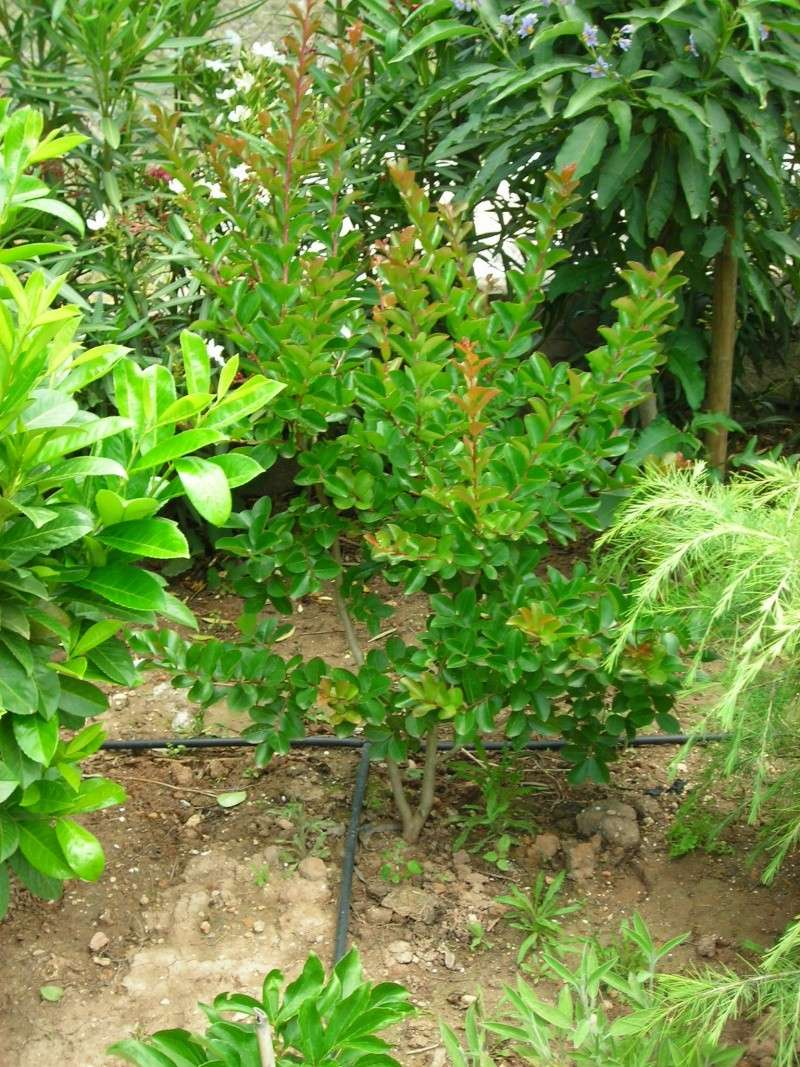 Nuestro jardín de Sa Possessió - Página 6 179_pl12