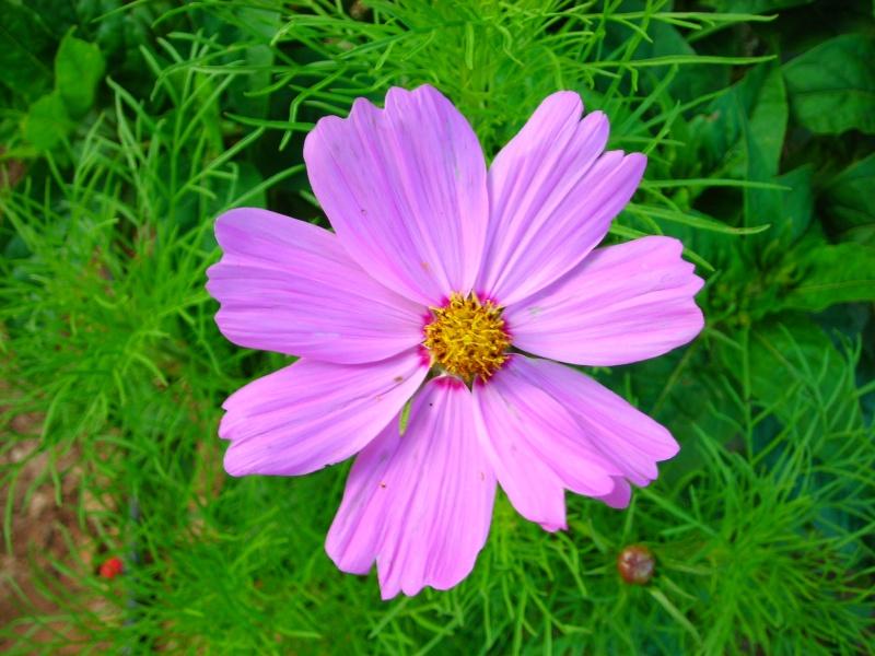 Nuestro jardín de Sa Possessió - Página 2 180_be10