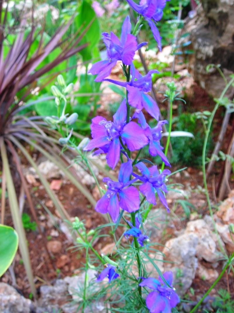 Nuestro jardín de Sa Possessió - Página 2 180_be11