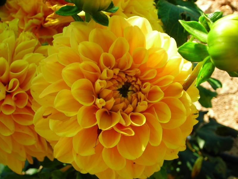 Nuestro jardín de Sa Possessió - Página 2 181_ne10