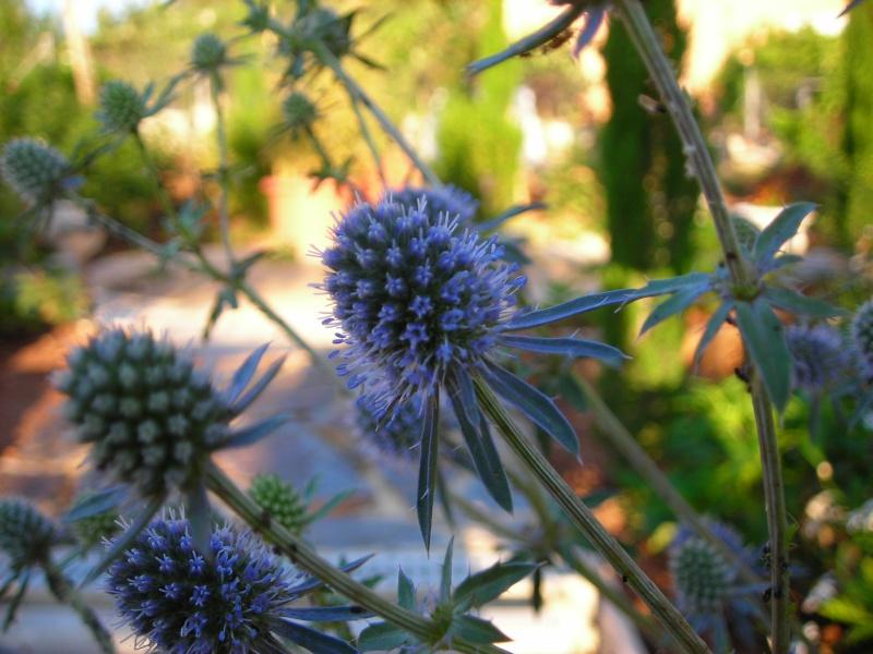 Nuestro jardín de Sa Possessió - Página 2 182_ho12