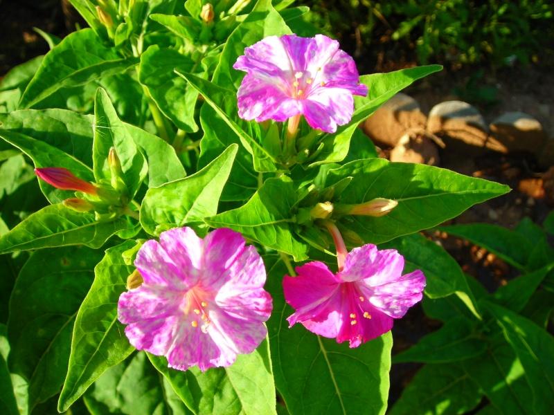 Nuestro jardín de Sa Possessió - Página 2 183_gl10