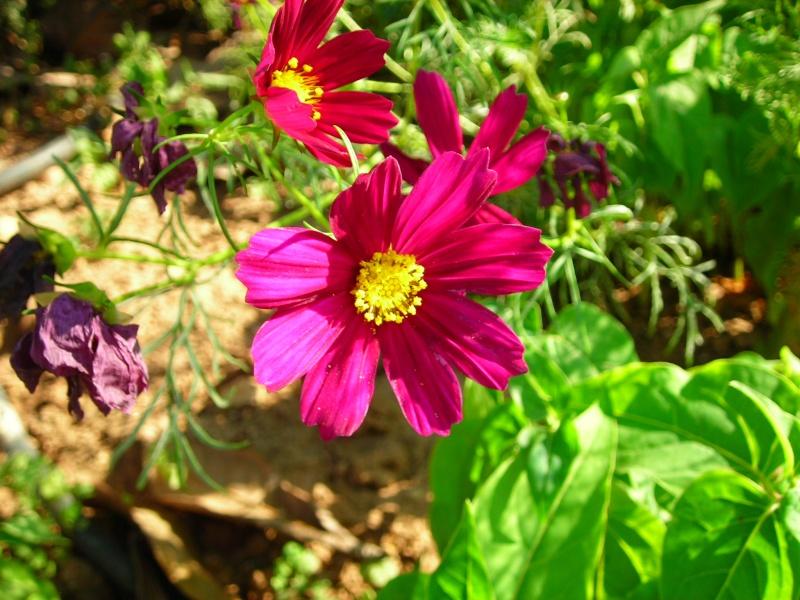 Nuestro jardín de Sa Possessió - Página 2 189_fl11