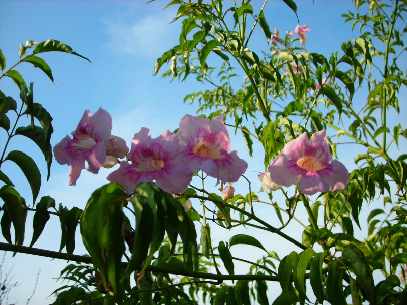 Nuestro jardín de Sa Possessió - Página 2 197_ag10