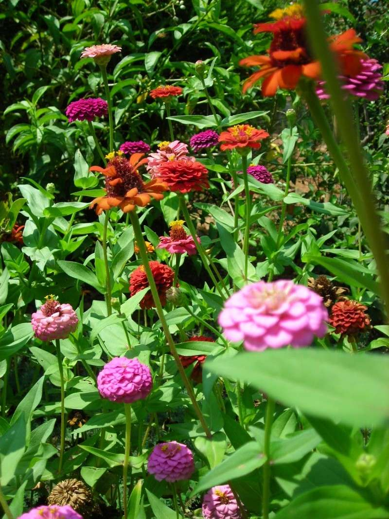 Nuestro jardín de Sa Possessió - Página 2 197_ag16