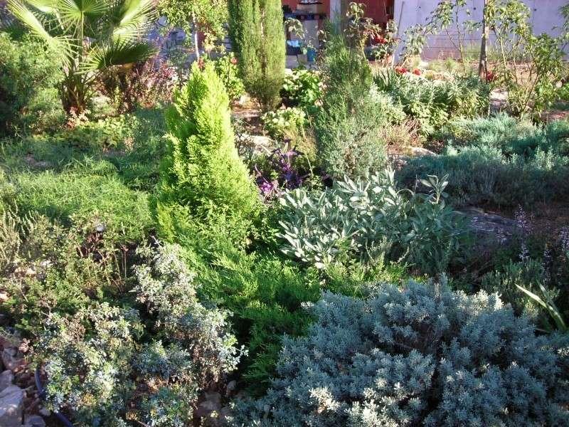 Nuestro jardín de Sa Possessió - Página 5 200_oc11