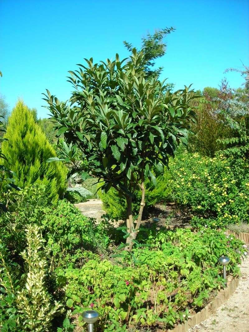 Nuestro jardín de Sa Possessió - Página 5 200_oc13