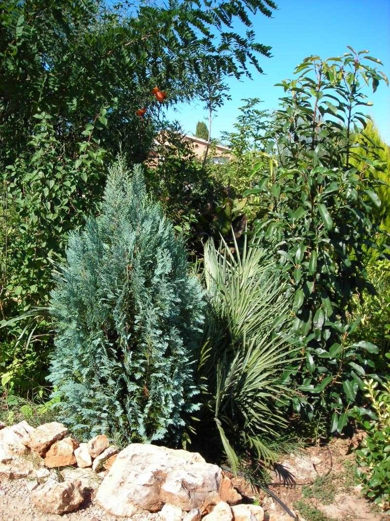 Nuestro jardín de Sa Possessió - Página 5 200_oc14