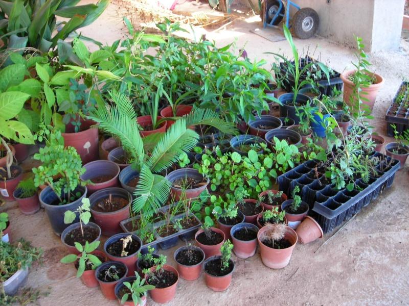 Nuestro jardín de Sa Possessió - Página 5 200_oc15