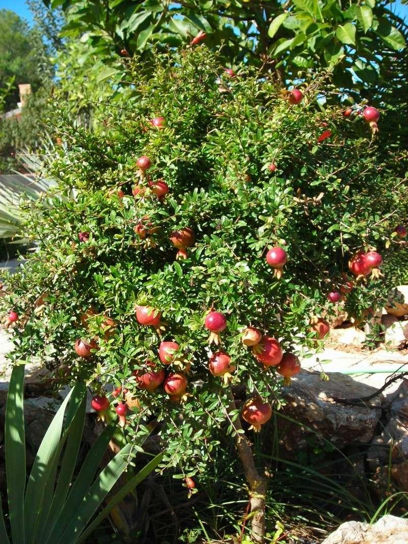 Nuestro jardín de Sa Possessió - Página 5 200_oc24