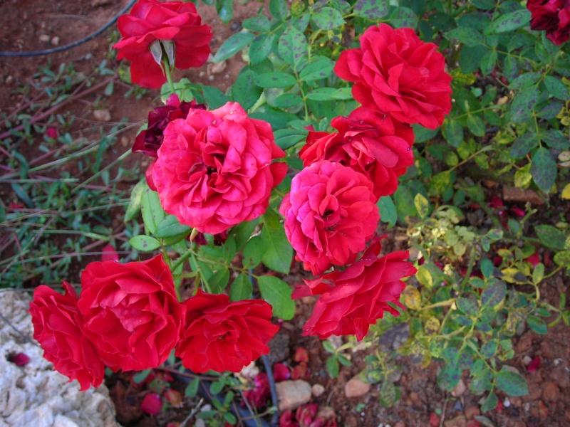 Nuestro jardín de Sa Possessió - Página 5 200_oc31