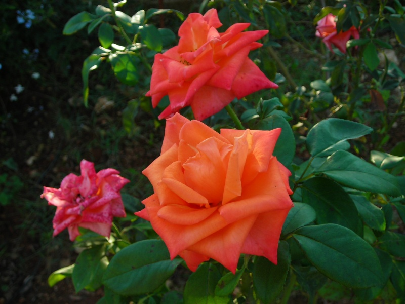 Nuestro jardín de Sa Possessió - Página 5 200_oc32
