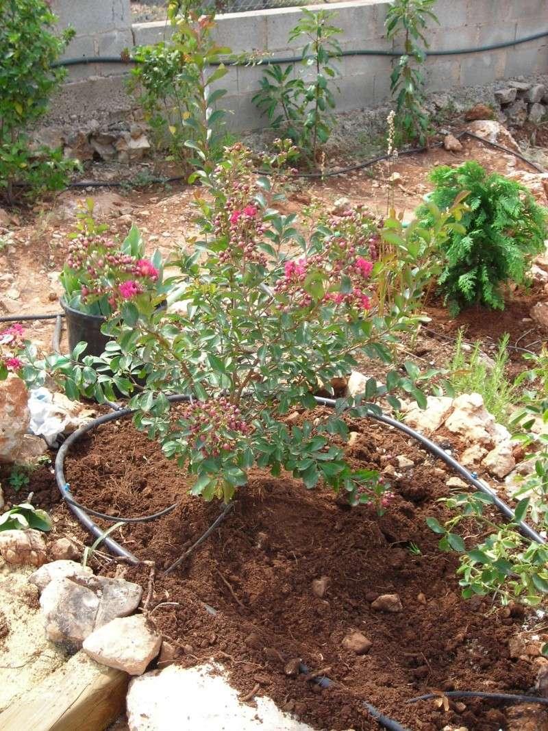 Nuestro jardín de Sa Possessió - Página 6 Plante10